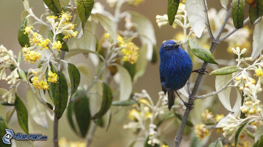blue bird, bird on a branch