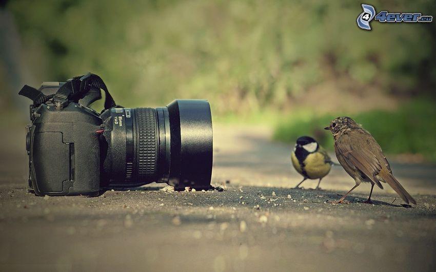 camera, birds