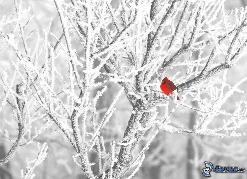 colorful bird, frozen tree, frost, winter