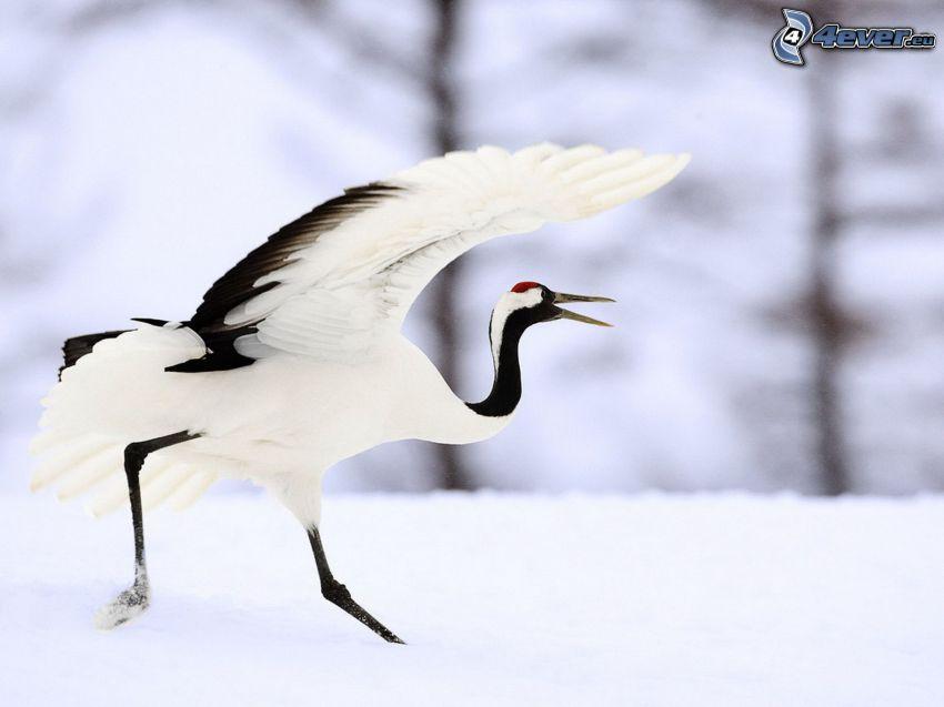 Crane, snow