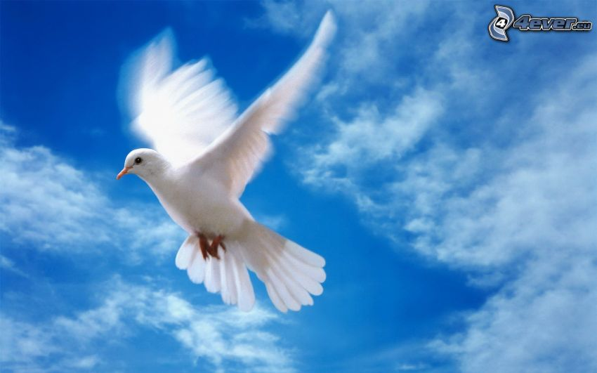 dove, flight, wings, clouds