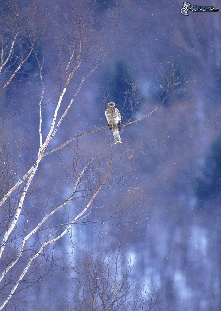 falcon, bird on a branch, snowfall