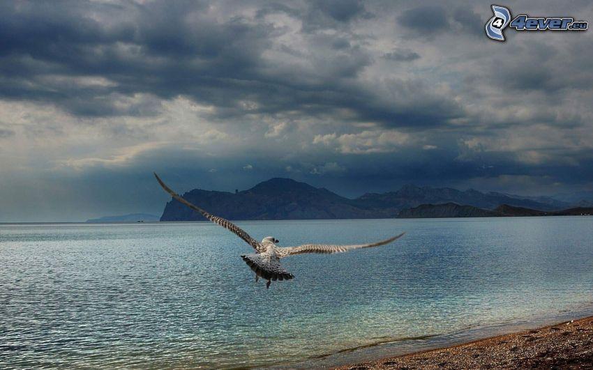 falcon, flight, wings, sea, clouds