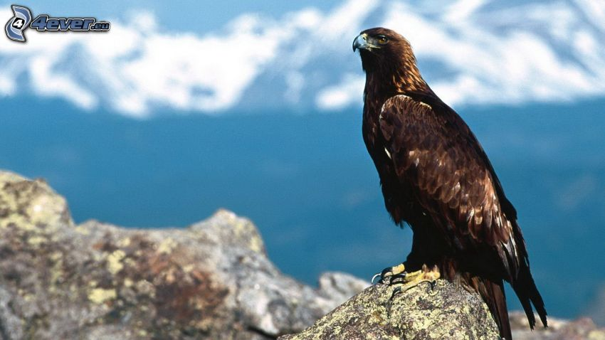 falcon, rocks, mountains
