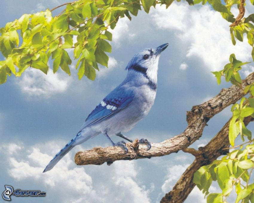 jay, twig, green leaves