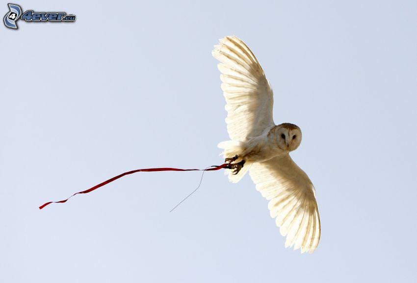 owl, flight
