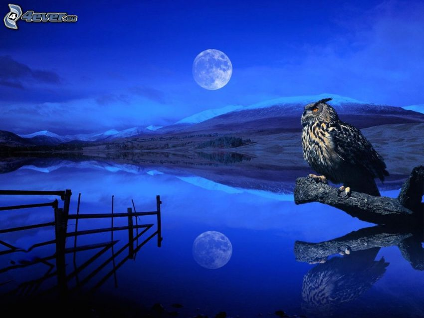 owl, lake, moon, mountain, night