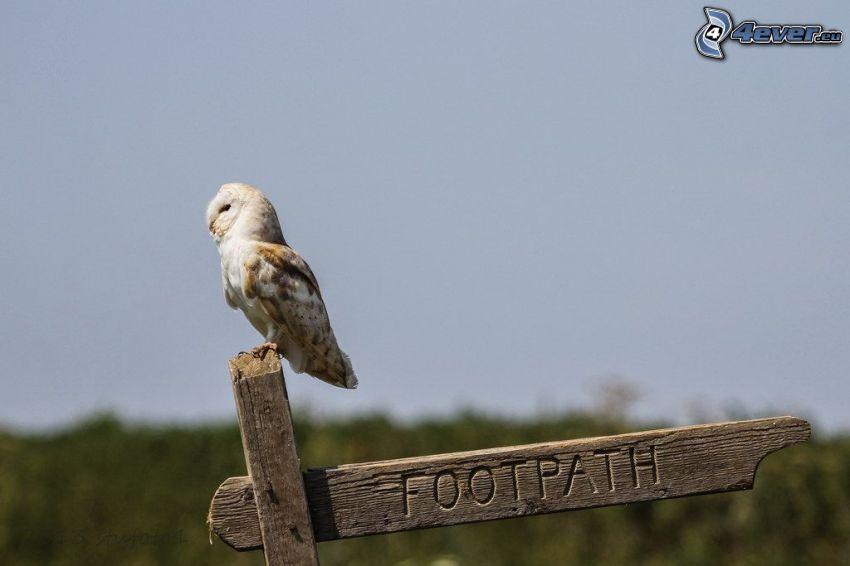 owl, sign