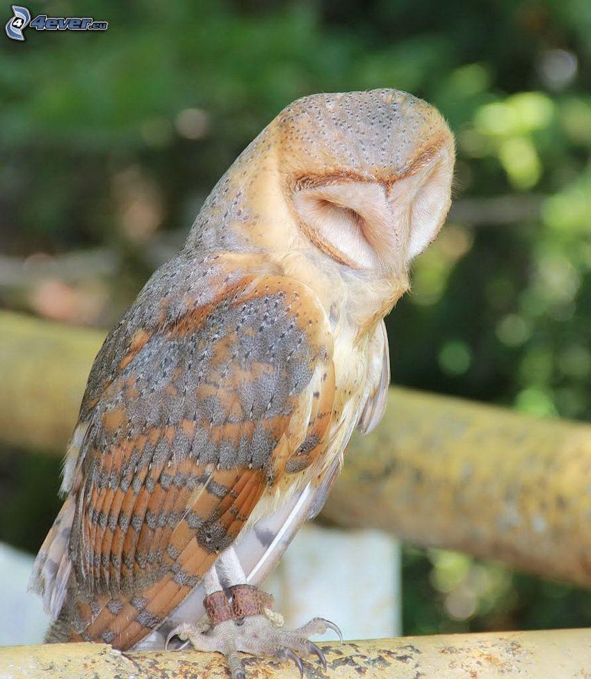 owl, sleep