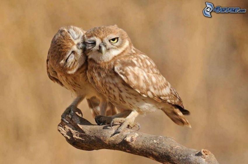 owls, wood