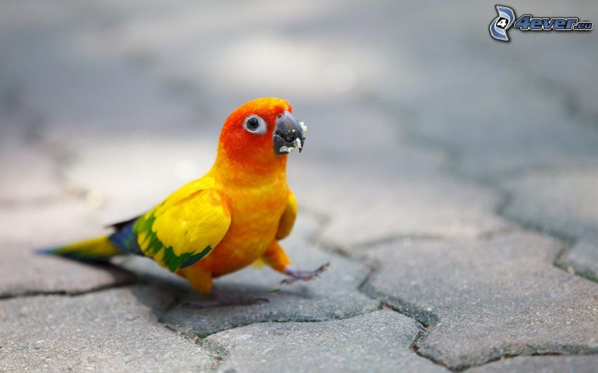 parrot, pavement