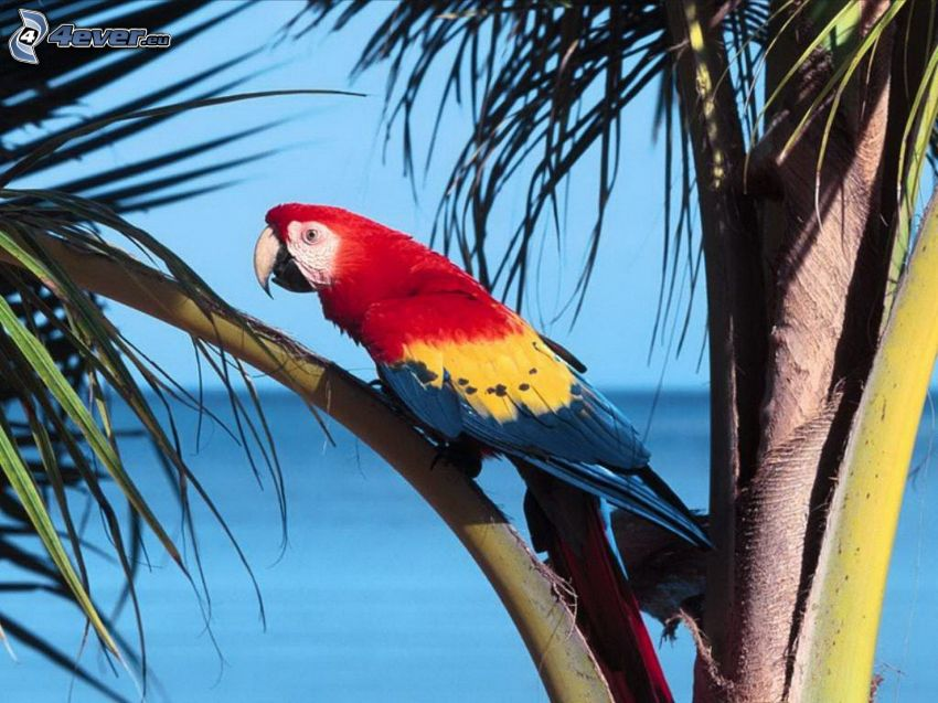 parrot Ara, palm tree