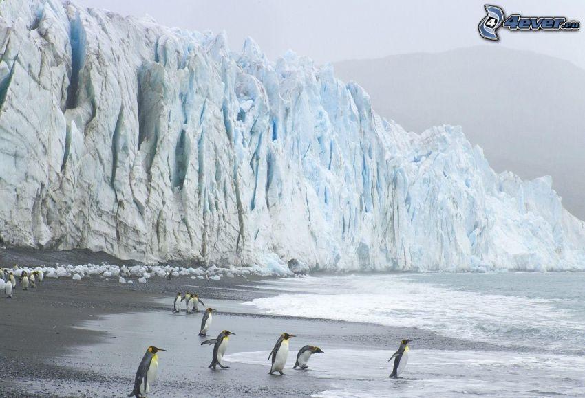 penguins, glacier