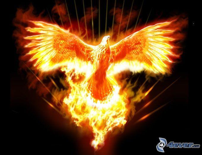 Phoenix, fiery bird, fire