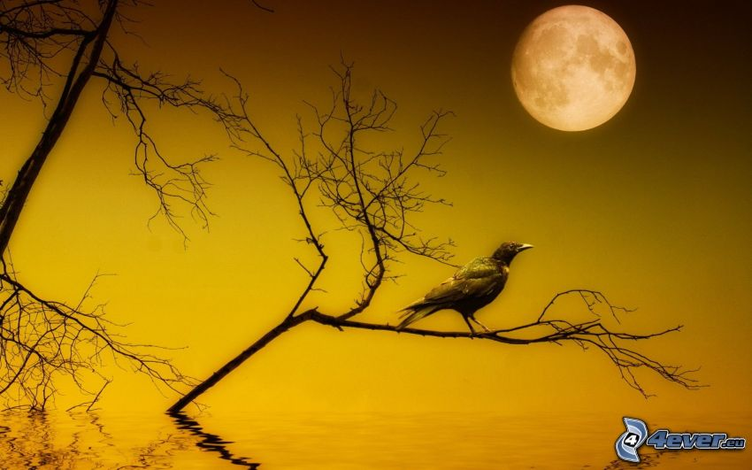 raven, branch, Moon, water