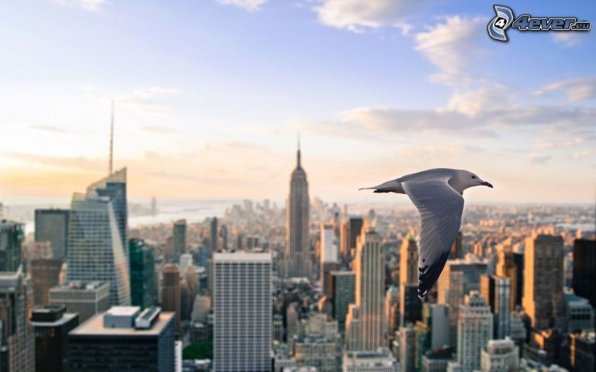 seagull, New York, Empire State Building