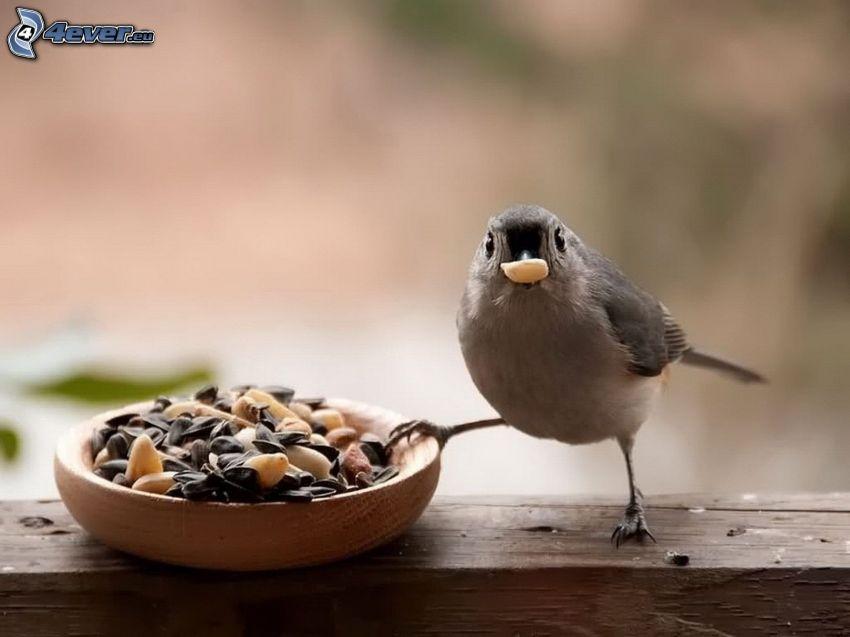 sparrow, seeds