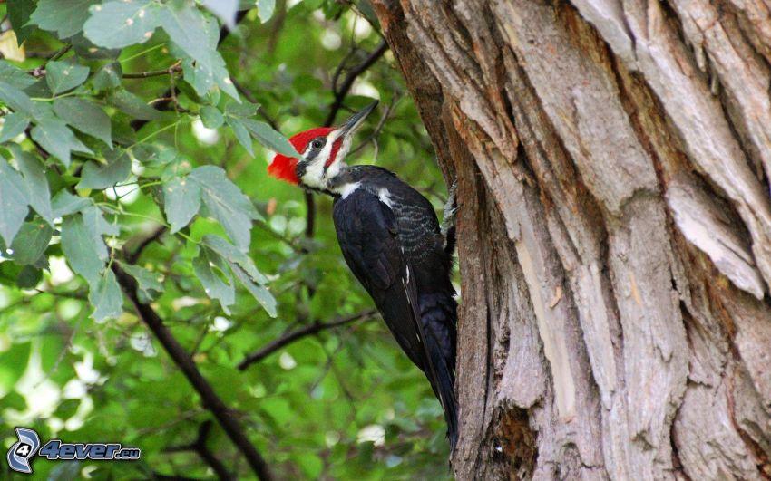 woodpecker, tree, green leaves