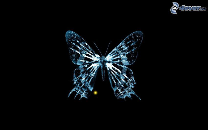 blue butterfly, black background