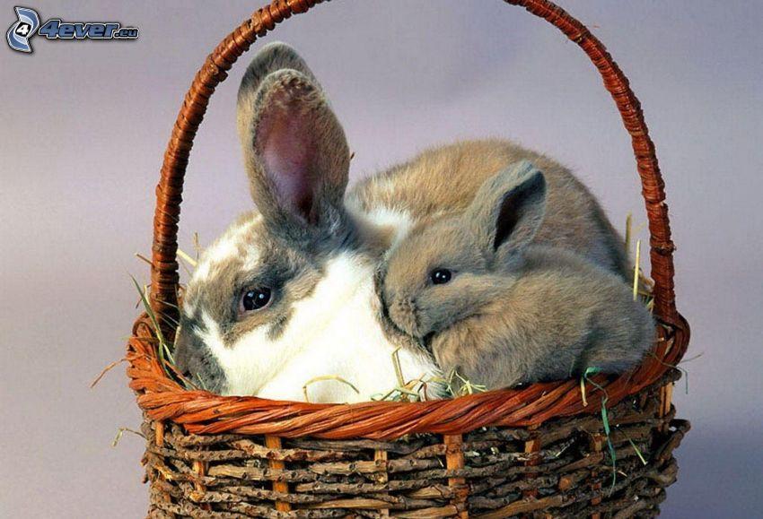 bunnies, basket
