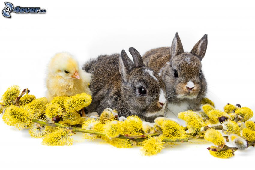 bunnies, chick, flowering twig