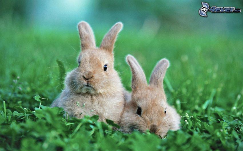 bunnies, greenery