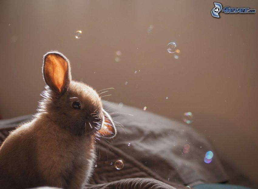 bunny, bubbles