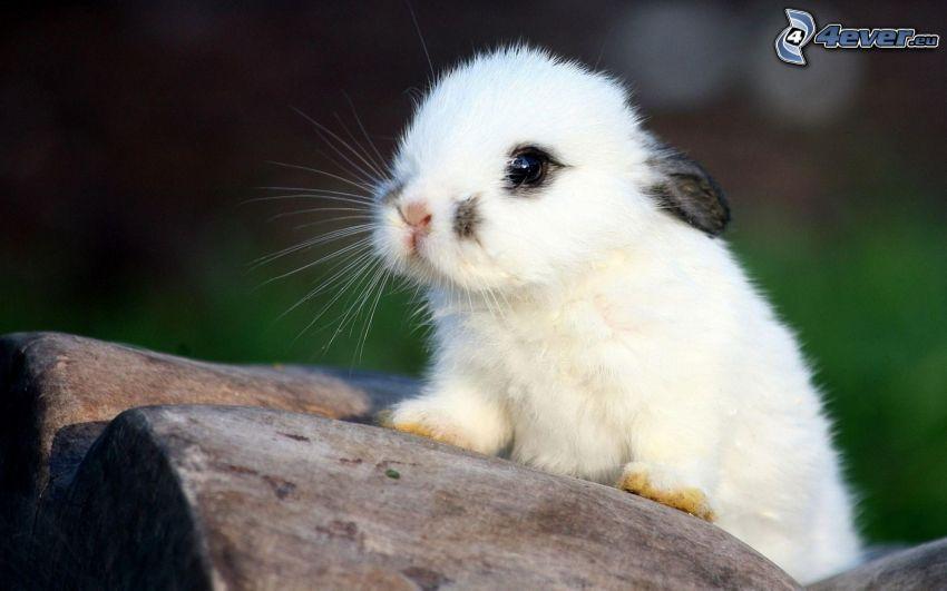 bunny, cub, wood