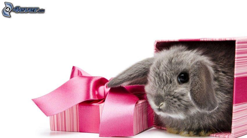 bunny, gift