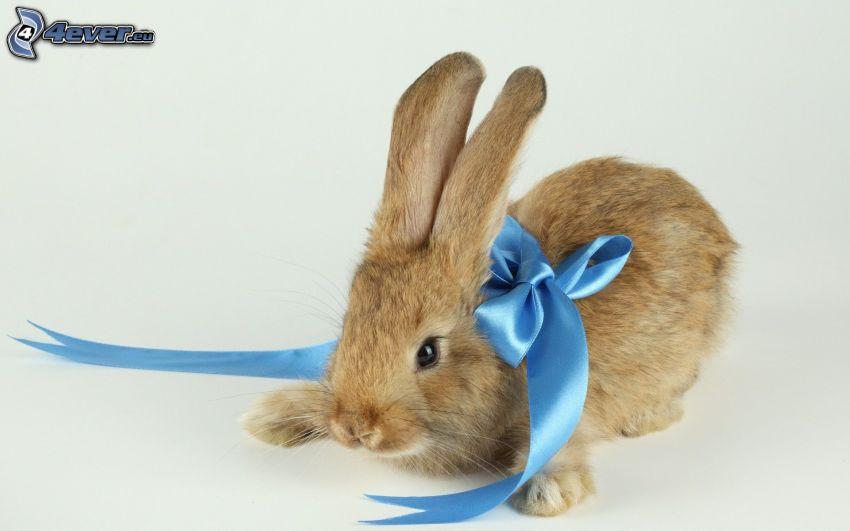 bunny, ribbon, gift