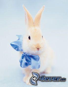 bunny, ribbon