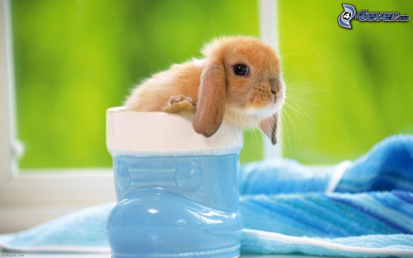 bunny, shoe