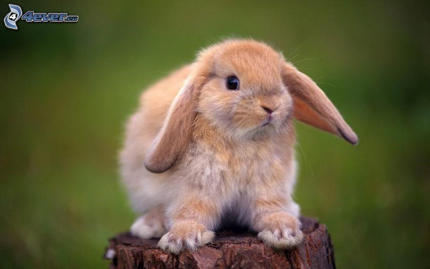 bunny, stump