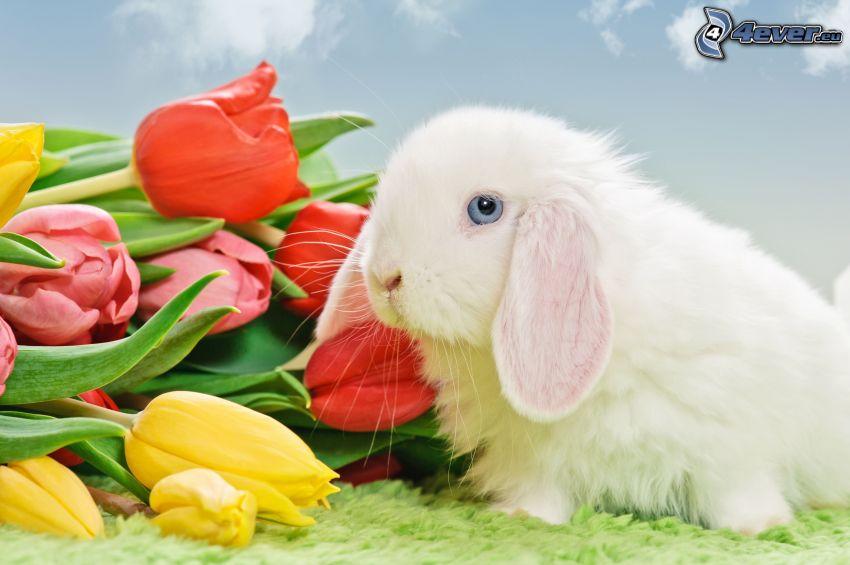 bunny, tulips
