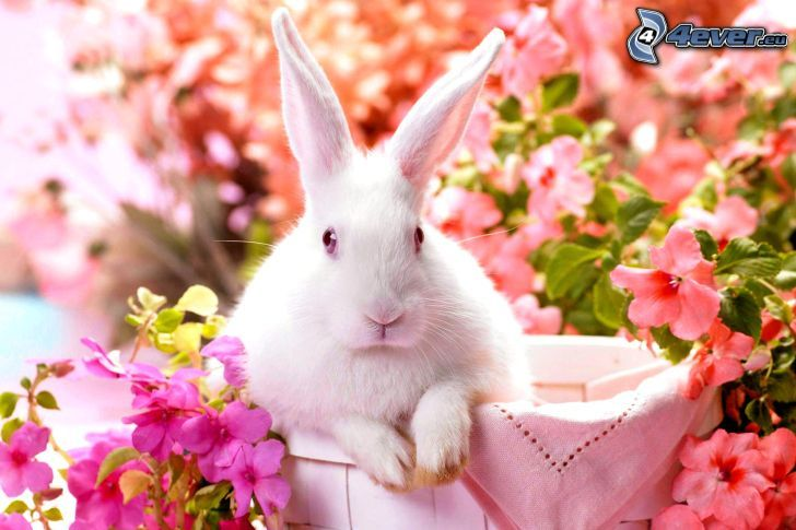 rabbit, flowers