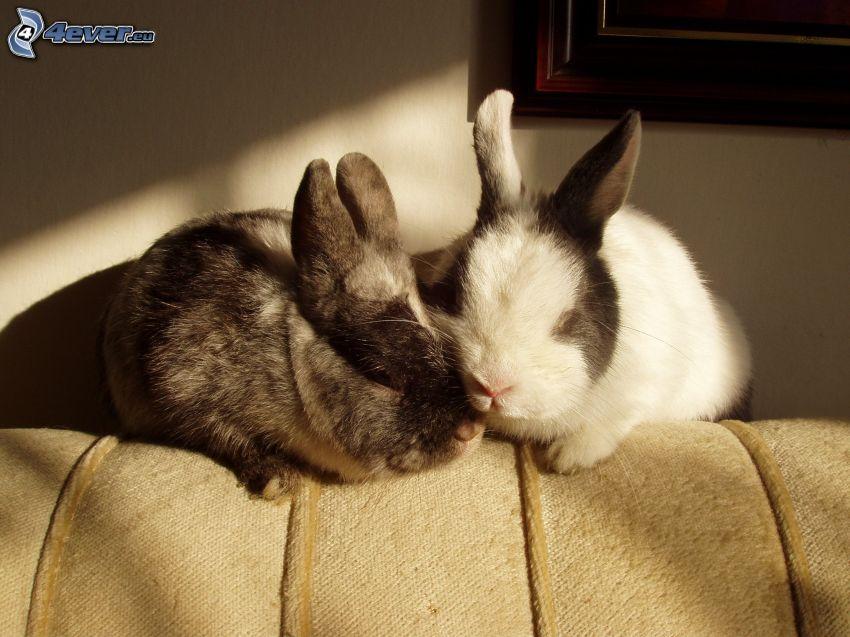 rabbits, sleep
