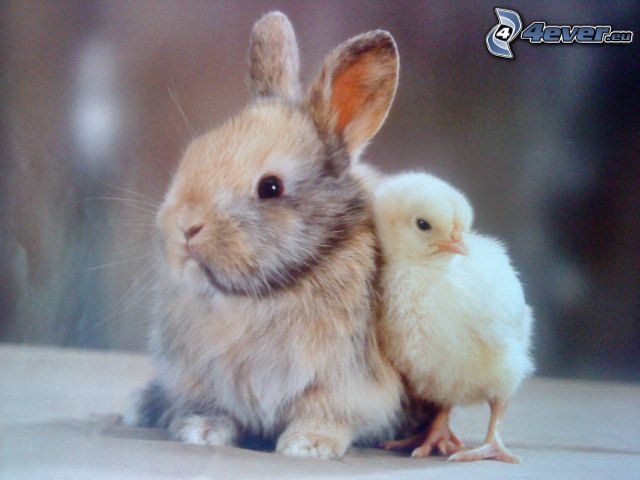 bunny, chick