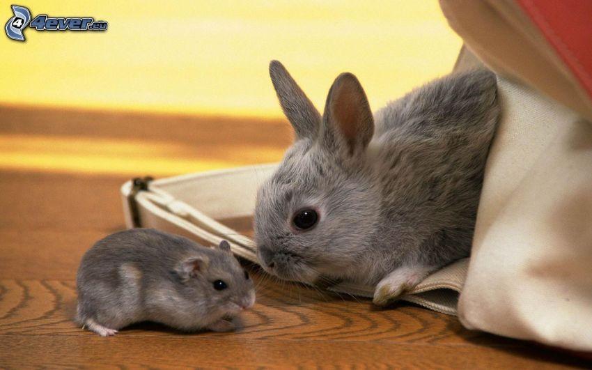 bunny, hamster, bag