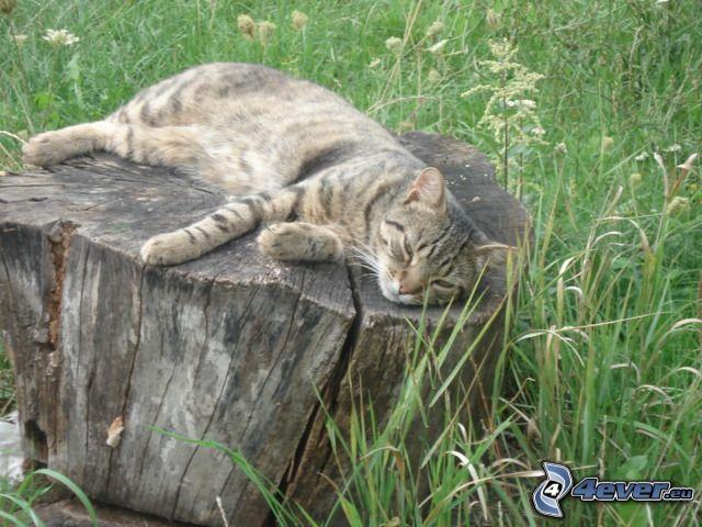 cat, stump, grass, meadow