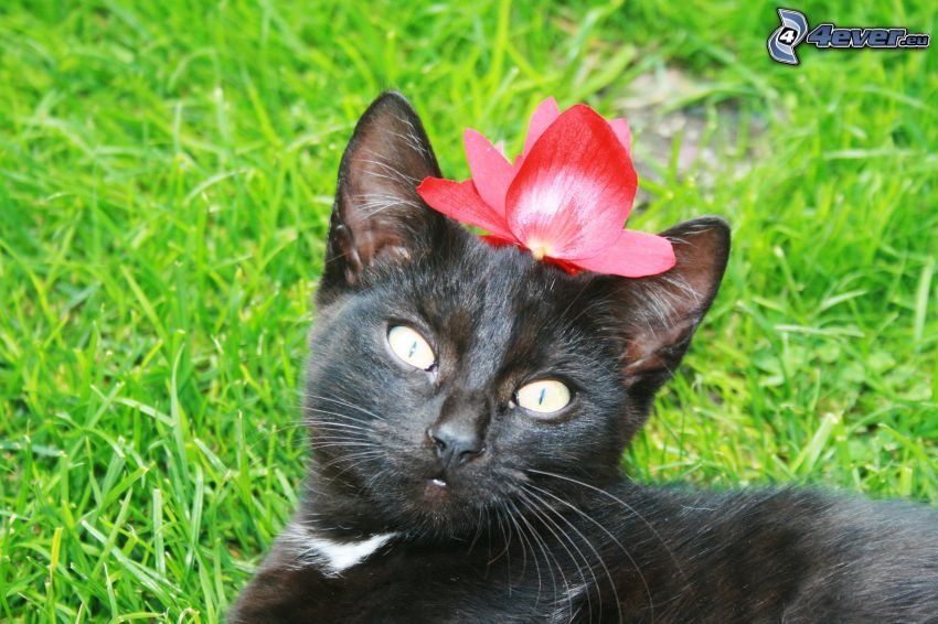black cat, cat in the grass, flower
