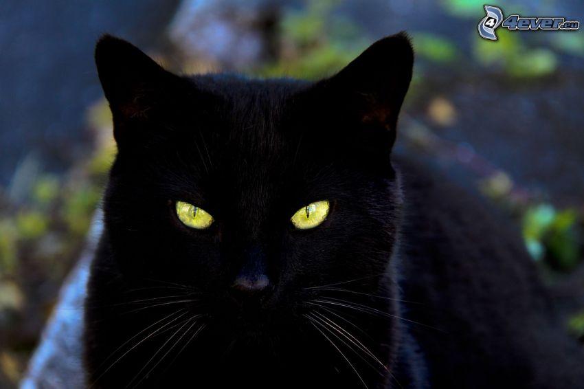black cat, cat's eyeview
