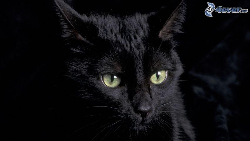 black cat, darkness