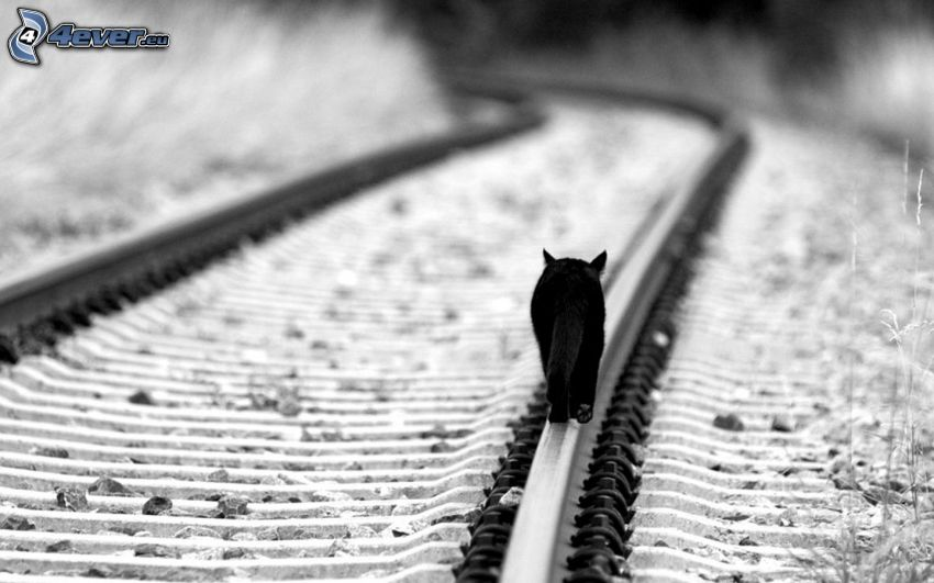 black cat, rails