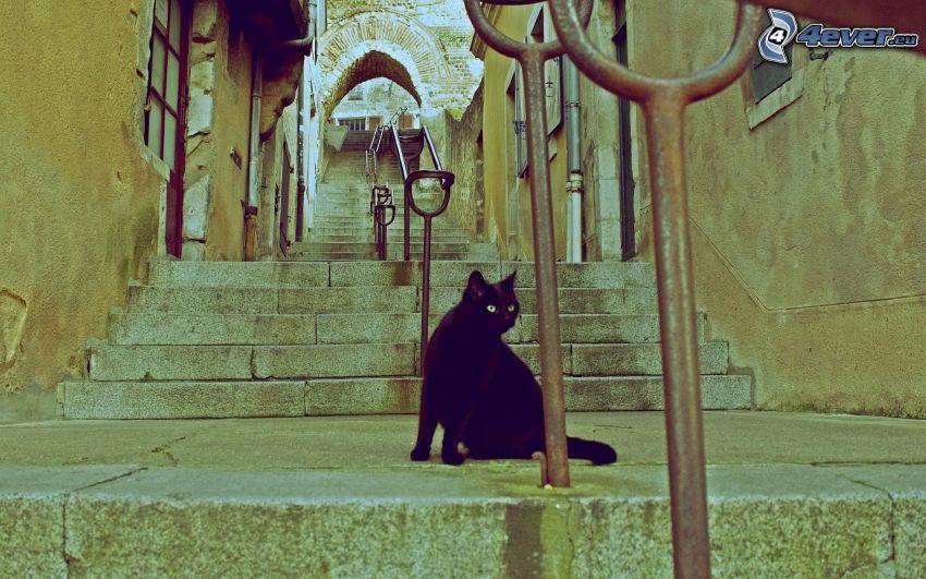 black cat, stairs