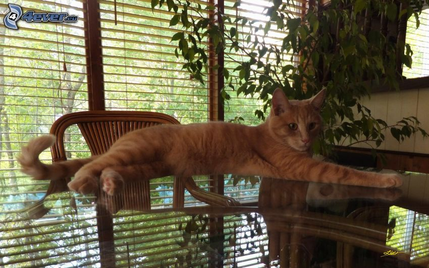 brown cat, glass, table