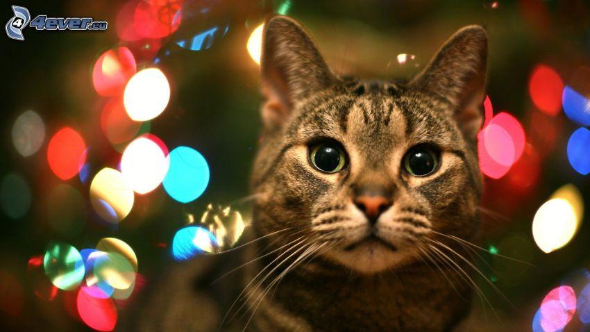 brown cat, lights