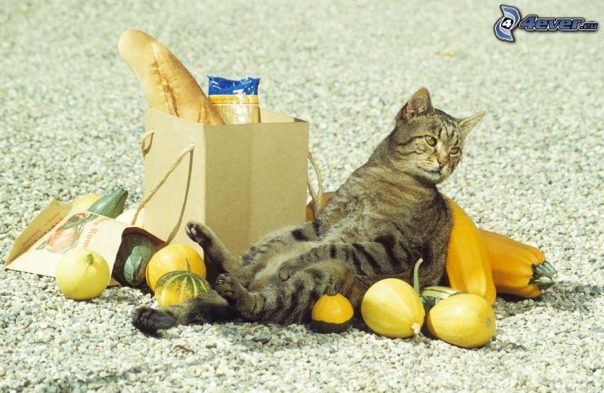 brown cat, pumpkins, baguette