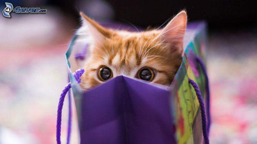 brown kitten, bag