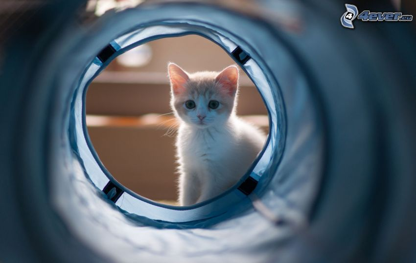 brown kitten, tunnel