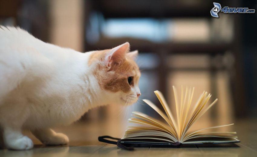 cat, book